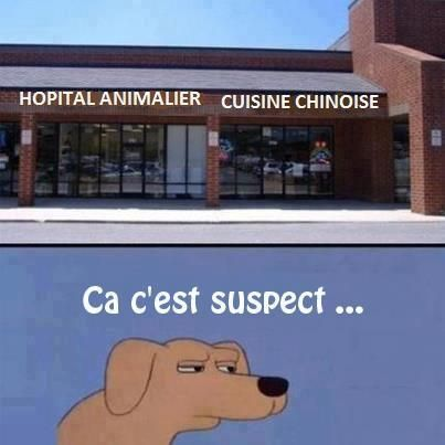 Animal hospital. Chinese cooking. How suspicious... Learn about French cats and dogs http://www.frenchtoday.com/blog/les-chiens-et-les-chats-francais