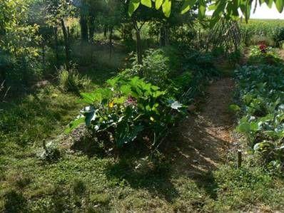 Cultures sur butte permaculture pinterest culture for Permaculture terrasses et buttes