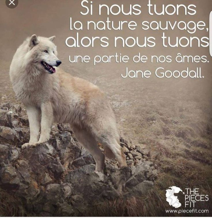Défendre les animaux et protéger la nature