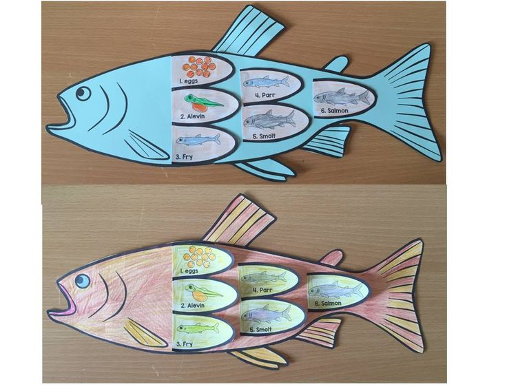 Fish life cycle art activity (Salmon life cycle art)