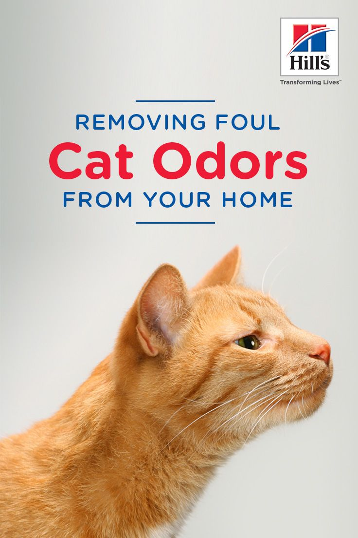 How To Get Rid Of Cat Odors For Good Cat Odor Cat Pee Smell