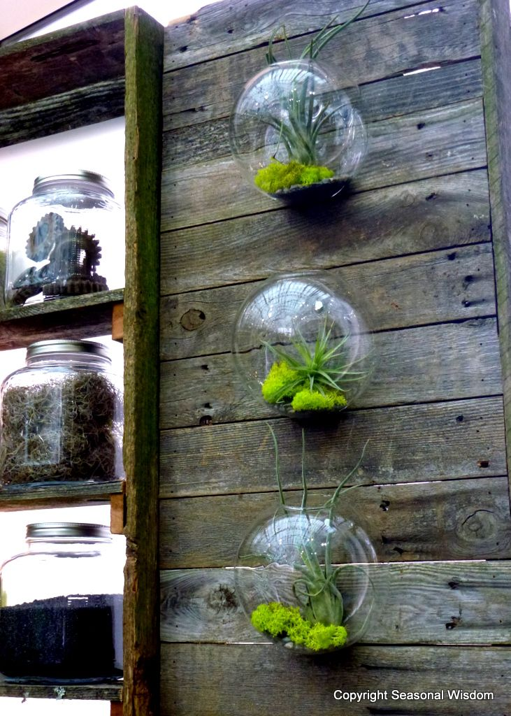 20 Best Glass Ball Terrarium Images On Pinterest Hanging