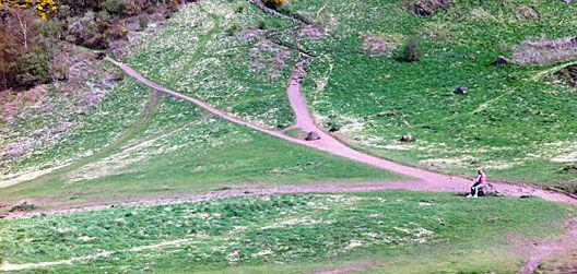 olifantenpaadjes in natuurgebied
