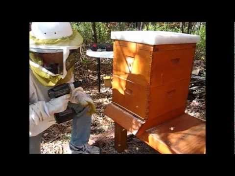 Backyard Beekeeping Part 20: Winter Preparations - YouTube