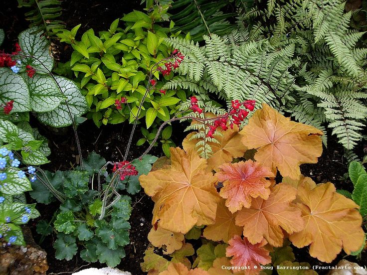 One of my shady garden areas. Brunnera, coral bells, perennial fuchsia, heuchera, Japanese fern in my garden. All perfect for shade, or part sun.