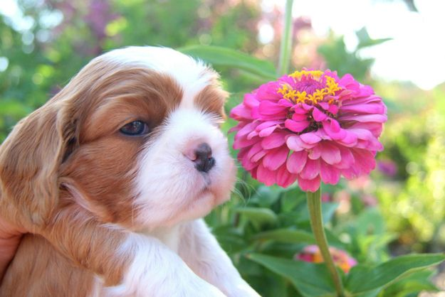 """He loves me, he loves me not... Wait, you all love me? I'm so silly."" 