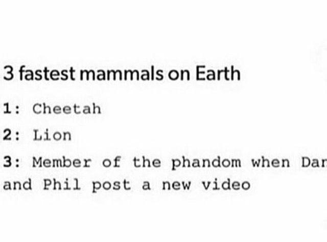 Actually a paragon falcon is fester than a cheetah but true