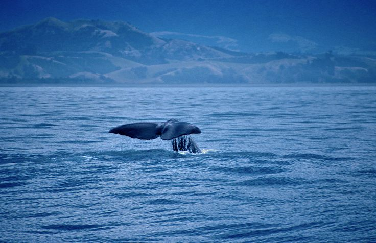 Photographer Pernille Westh | Sperm whale tail. The whale was photographed in New Zealand · Get my 7 FREE basic photography tips - you need to know! http://pw5383.wixsite.com/free-photo-tips
