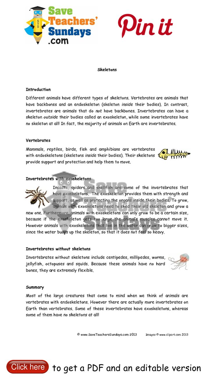 Animals with exoskeletons and no skeletons informtion sheet. Go to http://www.saveteacherssundays.com/science/year-3/327/lesson-7-animals-and-their-skeletons/ to download this Animals with exoskeletons and no skeletons informtion sheet. #SaveTeachersSundaysUK