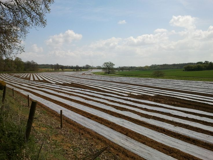 Crop Protection in the fields