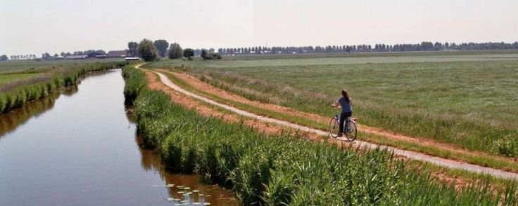 Noord-Holland test duurzaam fietspad van olifantsgras