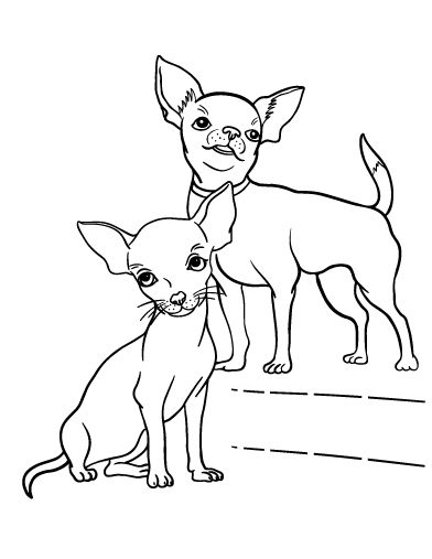All about Chihuahua Coloring Page Free Printable Coloring Pages ...