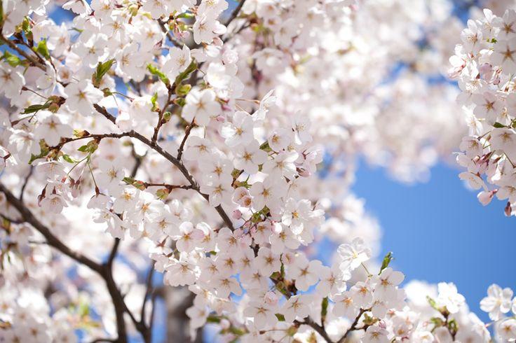 Spring in Oslo, Norway  www.susannevedvik.femelle.no