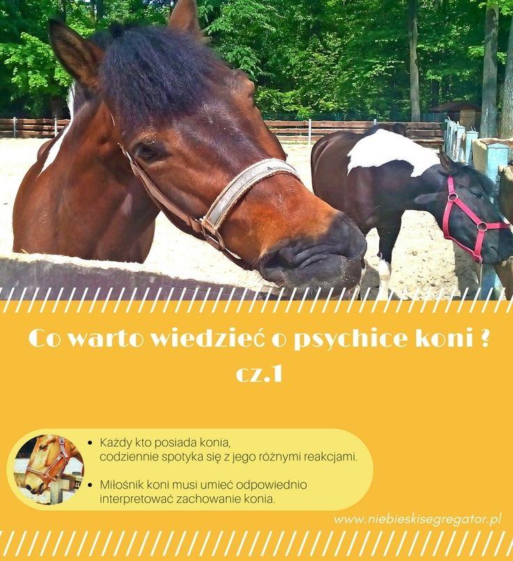 Co warto wiedzieć o psychice koni ? cz.1 - Niebieski Segregator