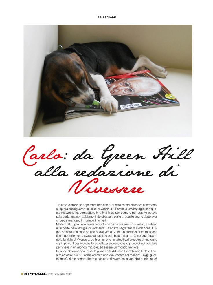 Vivessere ha un nuovo amico in redazione, Carlo, uno dei cuccioli di beagle di Green Hill.