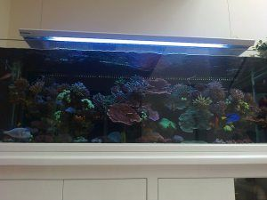 jual perlengkapan akuarium air laut