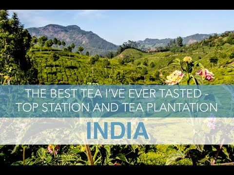India: The Best Tea I've Ever Tasted - Top Station and Tea Plantation in...