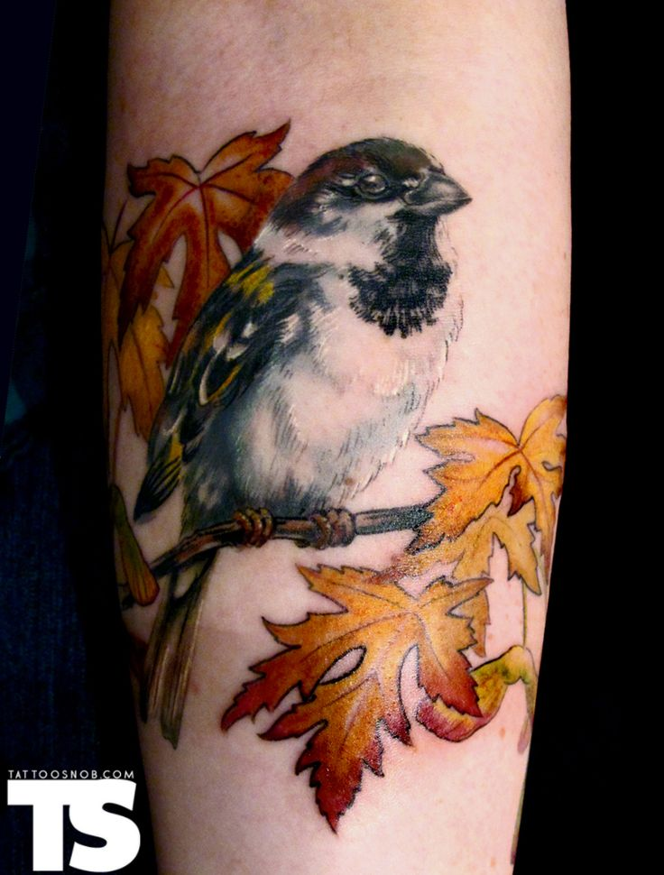 Maple sparrow tattoo by Esther Garcia