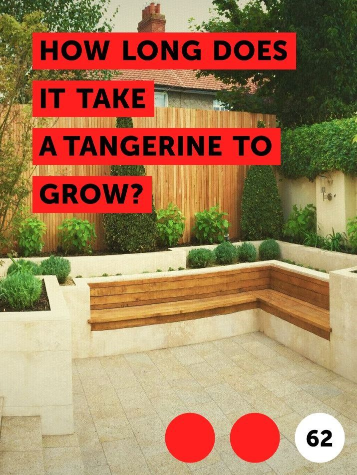 Learn How Long Does It Take A Tangerine To Grow How To Guides Tips And Tricks Plants Tangerine Tree Leyland Cypress