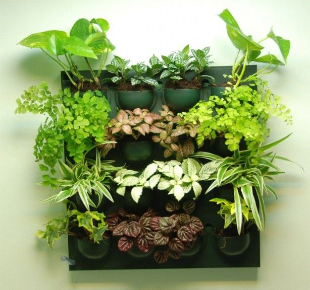 Je kruiden vers aan de muur van de keuken! Superhandig wandje om kruiden in te kweken of bloemen/ planten in te hangen. Er zit een bewateringsysteempje in en hij is waterdicht, dus ideaal voor in de kamer of keuken. Maak je eigen groene muur!