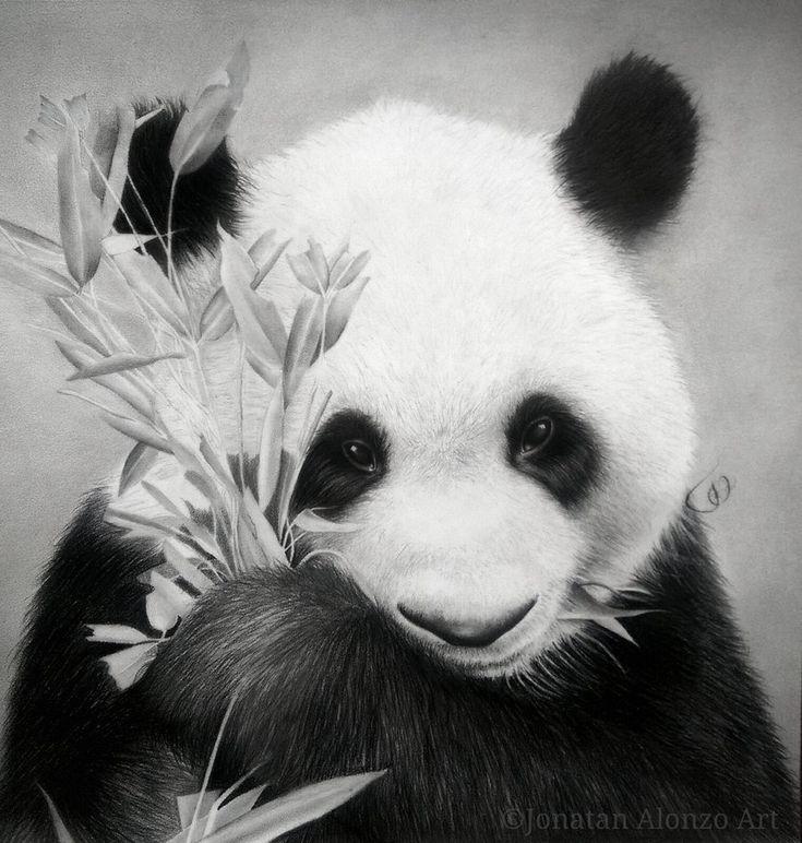 Panda by Jonatan Alonzo Art por JonatanAlonzo - Animales   Dibujando.net