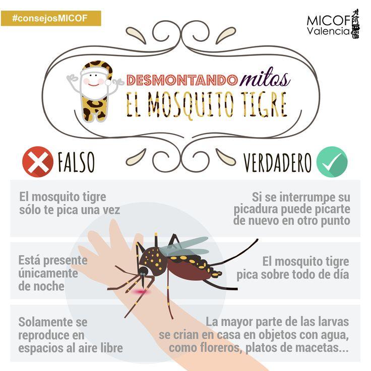 #mosquitotigre #desmontandomitosmicof