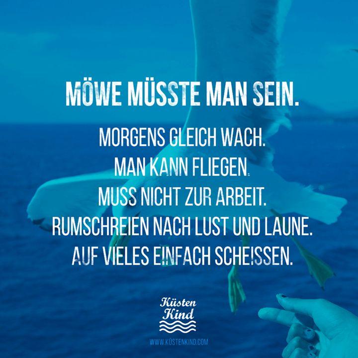 """""""Möwe müsste man sein."""" Küstenkind #sprüche #zitate quotes"""
