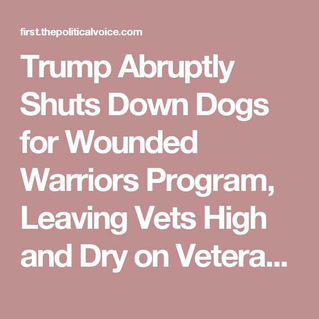 Trump Abruptly Shuts Down Dogs for Wounded Warriors Program, Leaving Vets High and Dry on Veteran's Day! – The Political Voice