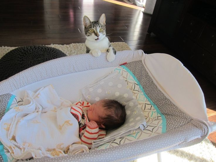 This couple forgot to tell their cat they'd had a baby…   This Couple Forgot To Tell Their Cat They'd Had A Baby