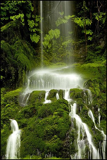 Quinault Rain Forest--waterfalls are most dramatic in spring w/ rains and glacial thaw from uplands