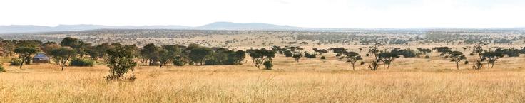 Serengeti with Tanzania Odyssey