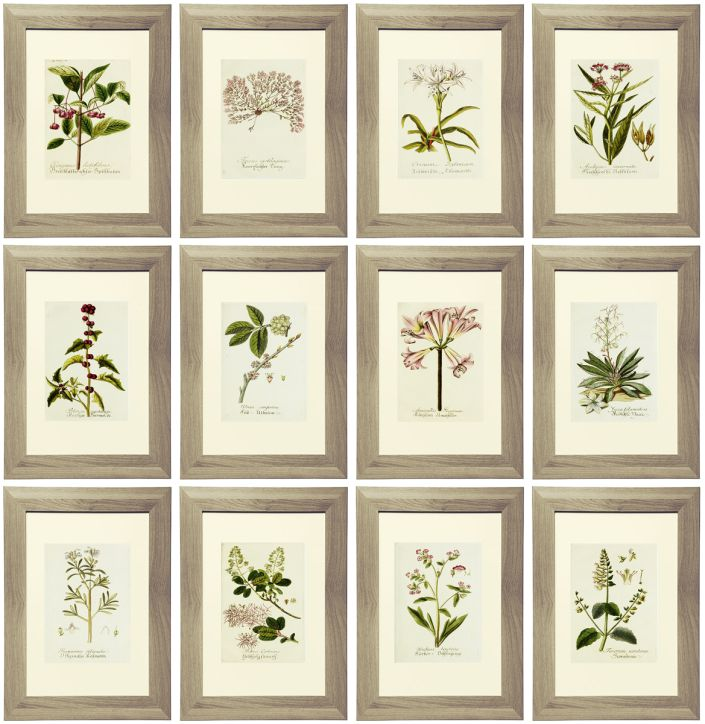 21 Free Botanical Printables