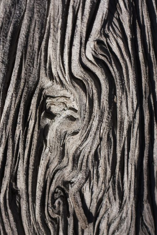 Form And Texture : Natural wood with sculptural patterns textures tree
