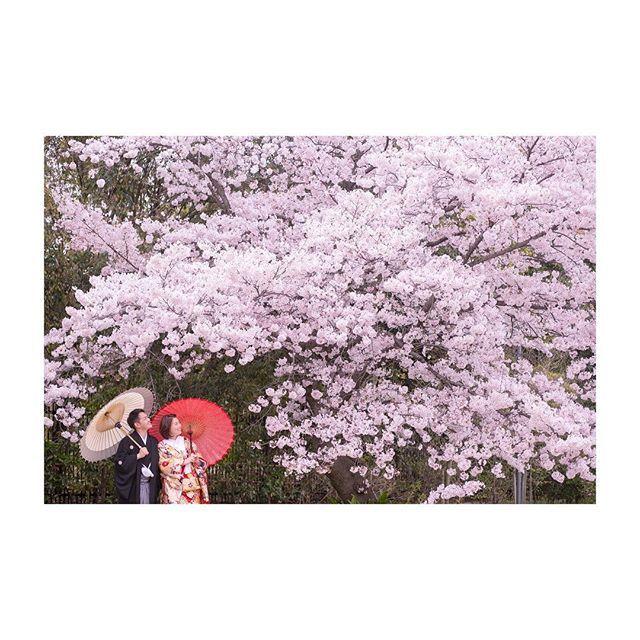 【osaka_laviephotography】さんのInstagramをピンしています。 《春は、すぐそこ!..* 2/5 ・ 3/5  2days 大阪フェア開催 桜・新緑の時期に撮影をご検討のお客様へ、大変お得な大阪店限定プランをご用意! さらに即決のお客様にはご新婦様衣装ランクアップ30,000yen off!  是非この機会にお越しくださいね! ただいま来店ご予約承り中です★  @laviefactory @lavie_osaka_family  #photoby_babing  #ハートのある写真#生きる写真 #wedding #photo #laviefactory #instawedding #ig_wedding #smile #weddingtbt #結婚式 #スタジオフェア #写真 #カメラマン  #ウェディングフォト #ウェディングドレス #私服撮影 #ロケーション前撮り #プレ花嫁 #卒花 #エンゲージメントフォト#写真が好きな人と繋がりた #桜 #ファインダー越しの私の世界 #2017春婚 #2017夏婚 #大阪花嫁  smiles : )》