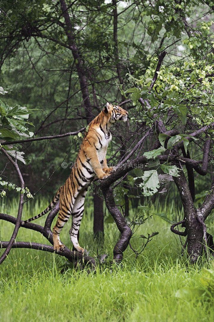 1000+ images about Terrestrial habitat on Pinterest ...