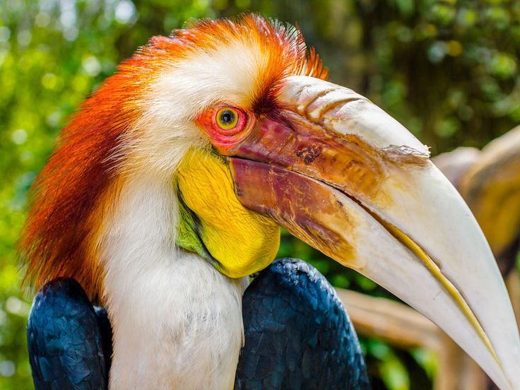 Colourful Papuan Hornbill Jigsaw Puzzle In Puzzle Of The