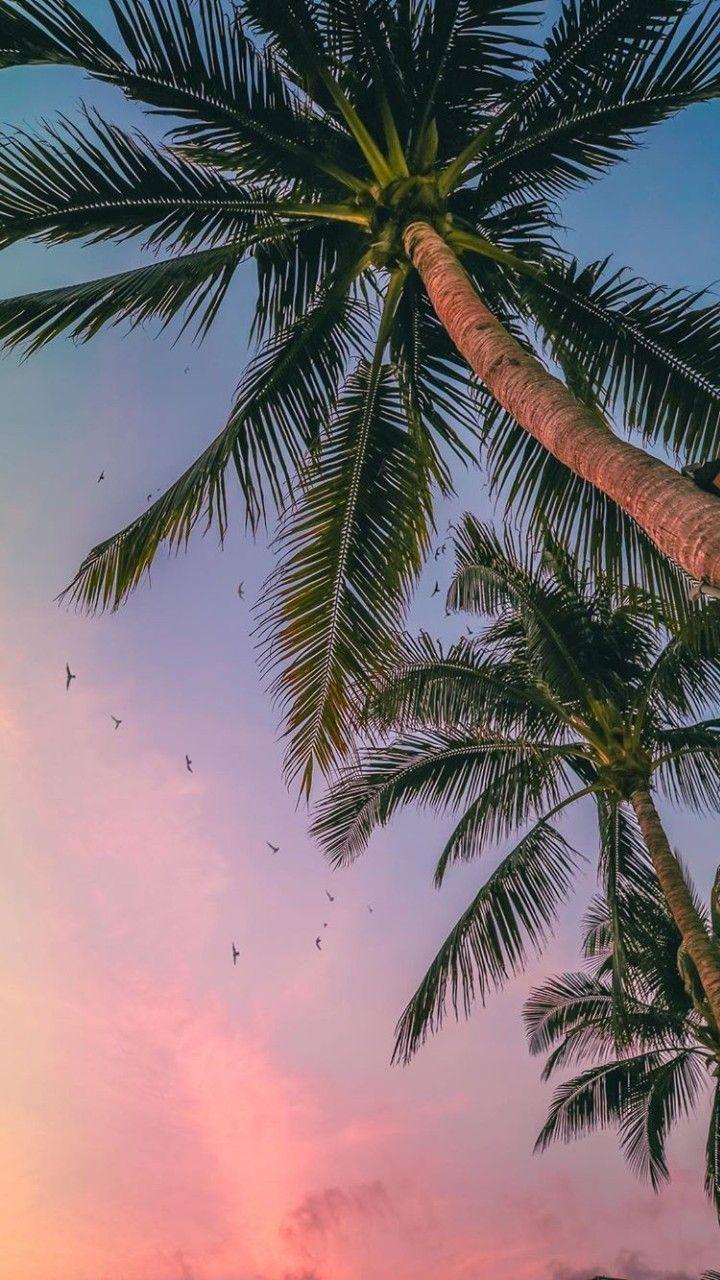 Seguitemi Su Tik Tok Andreielisa Palm Trees Wallpaper Tree