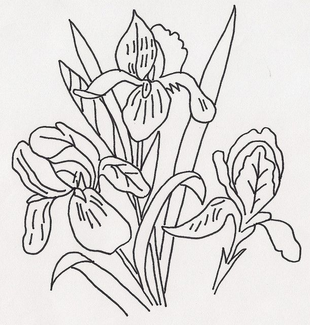 Line Drawing Of Iris Flower : Best images about line drawings of irises on pinterest