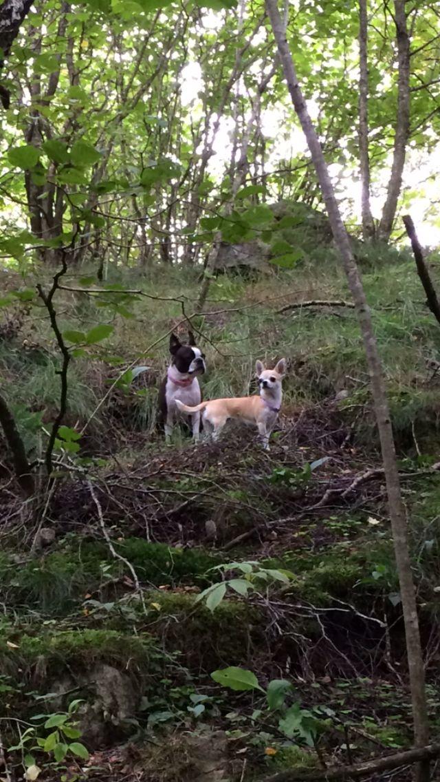 Tuulikki and Evita :)