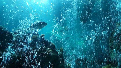 Ons verslag over Sea Life Oberhausen al gelezen? Nee? Doen zu ik zeggen, het was een erg leuk uit!