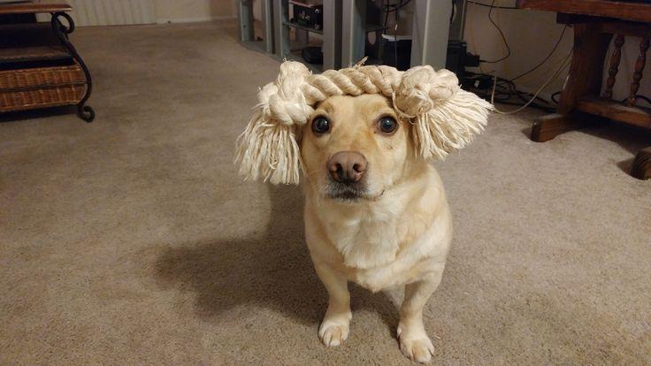My Corgi/Lab dog wearing a rope hat. He's a damn good. http://ift.tt/2cTLRnm