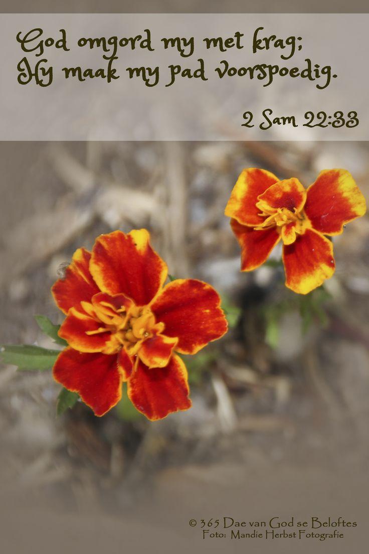 Dag 152  2 Sam 22:34 Byvelvers God omgord my met krag; Hy maak my pad voorspoedig.
