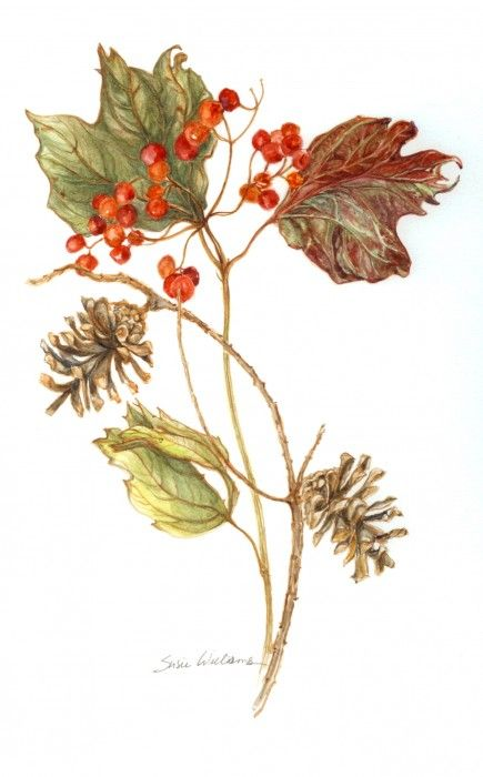 berries and cones