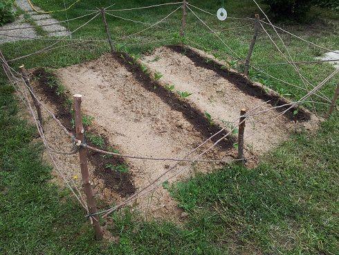 Como hacer una cerca para el huerto con restos de poda - Cuando podar hortensias ...