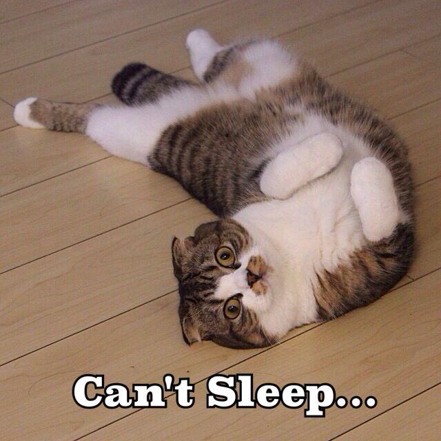 Can't sleep | Animals | Pinterest