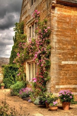 French Country... flowering vines growing on the exterior