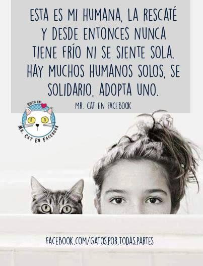 adopta un humano. Gatos.