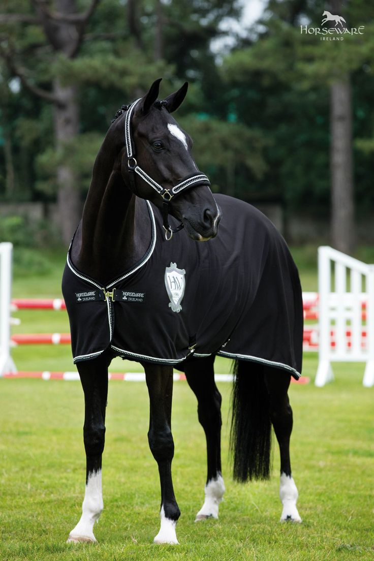 I want a horse but not a whole lot but it's something that I would take!!!