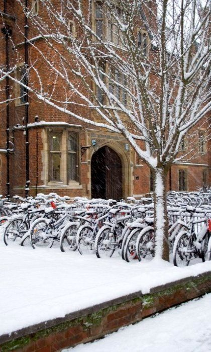 Selwyn in the snow, Cambridge, England, UK