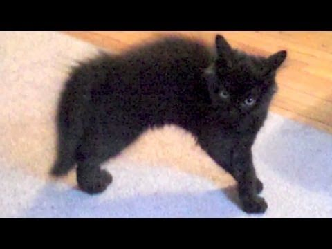 The most incredible cat moment caught on video! - YouTube